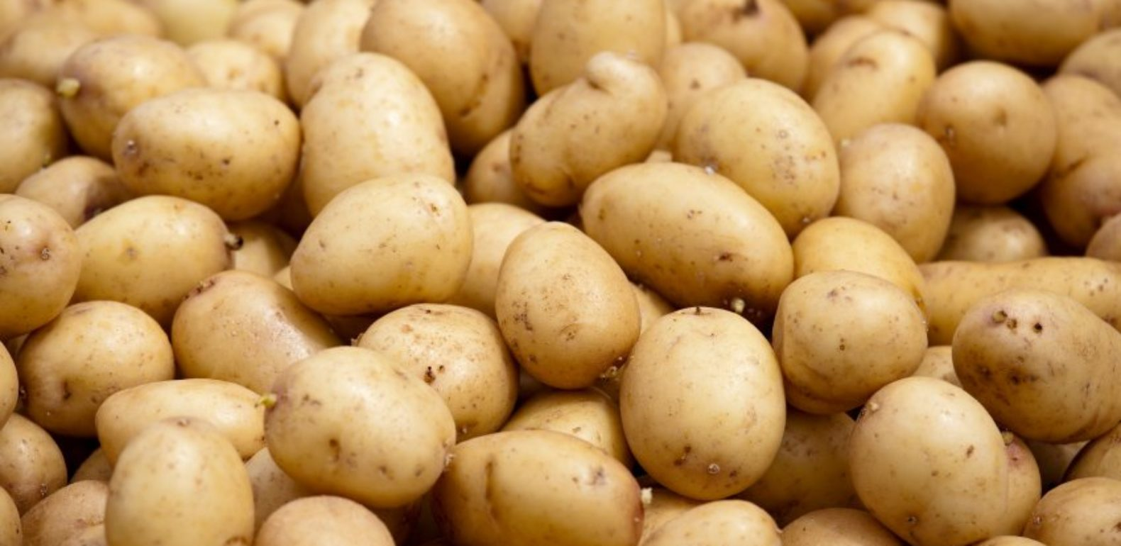 Le jus de pomme de terre l alli de votre estomac - Faire germer des pommes de terre ...