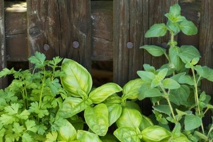 les herbes aromatiques en cuisine astuces une culture en. Black Bedroom Furniture Sets. Home Design Ideas