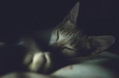 8 conseils pour bien dormir