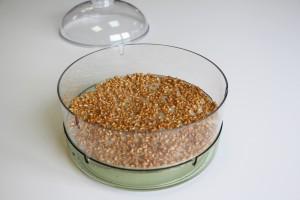 Graines bioSnacky papier buvard