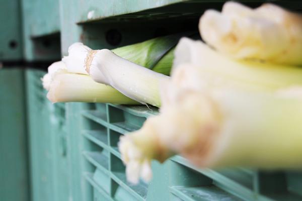 Poireaux servant à la fabrication d'Herbamare
