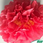 pollen-milieu-fleur