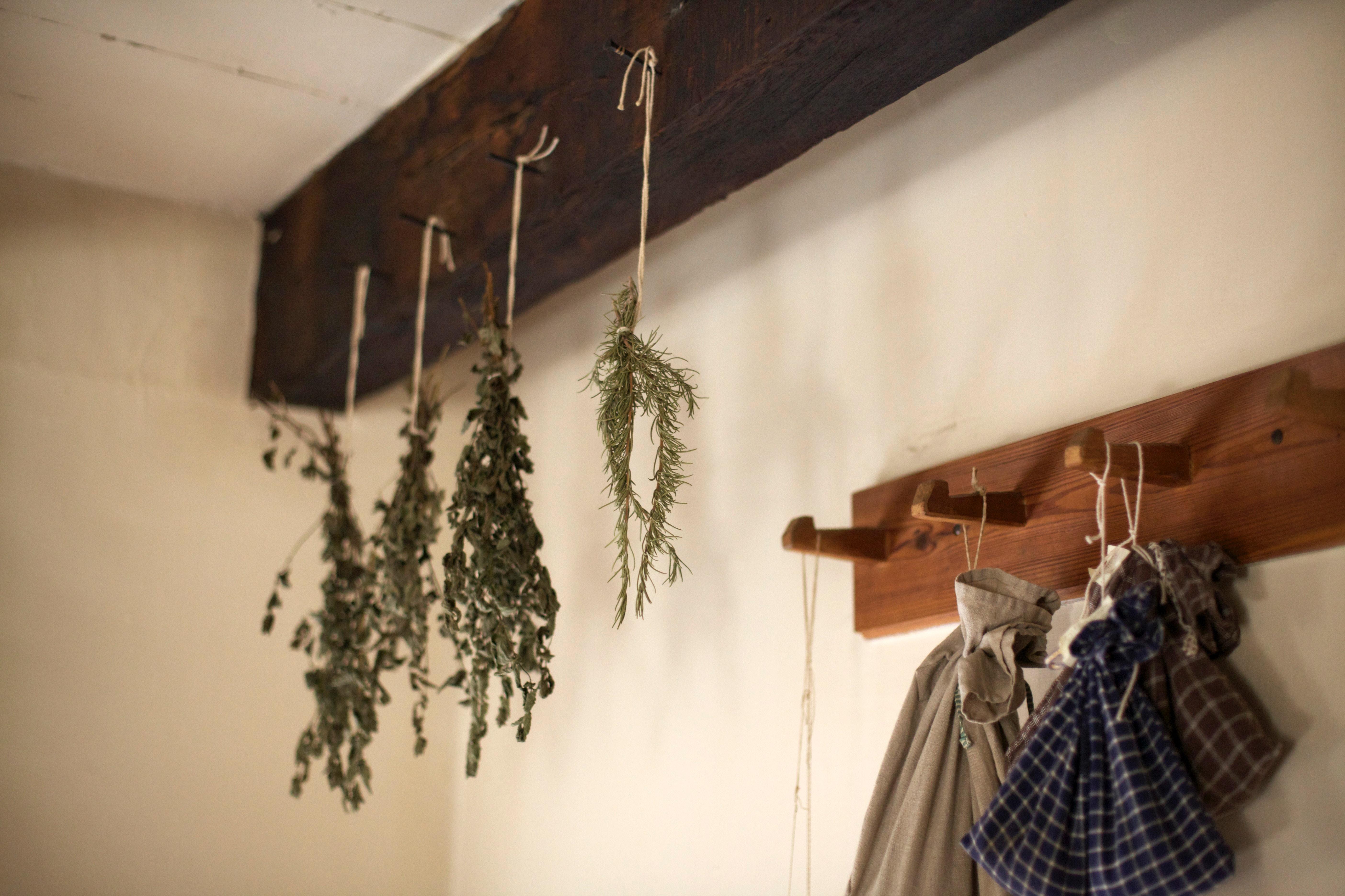 Le millepertuis : une plante pour voir la vie en roseA..